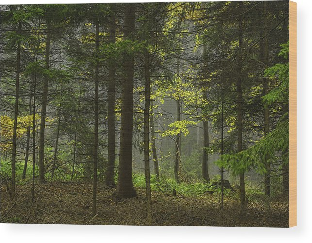 Landscape Wood Print featuring the photograph Young Forest by Christine Czernin-Morzin