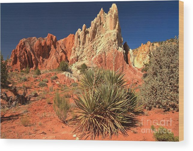 Cottonwood Road Wood Print featuring the photograph Yucca Badlands And Colors by Adam Jewell