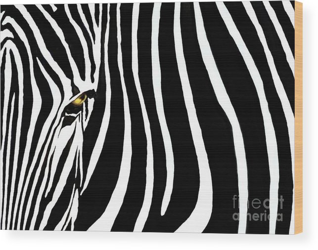 Zebra Wood Print featuring the photograph Zebressence by Dan Holm