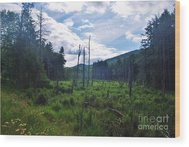 Wood Print featuring the photograph Adk2012 26 by TSC Photography Timothy Cuffe Jr