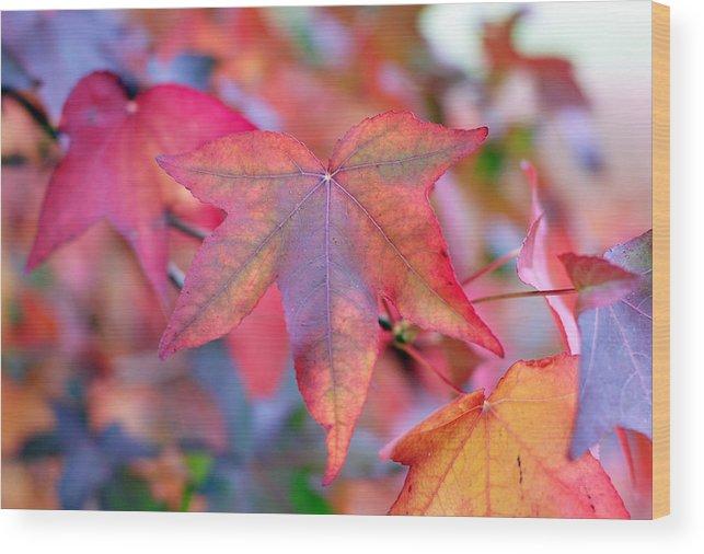 Leaf Wood Print featuring the photograph Autumn Rainbow by Barbara Domanska