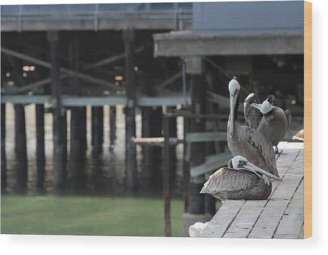 Pelican Wood Print featuring the photograph California Brown Pelicans 3 by Sakari Kouti