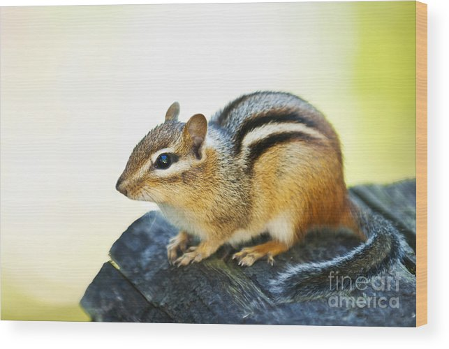 Chipmunk Wood Print featuring the photograph Chipmunk by Elena Elisseeva