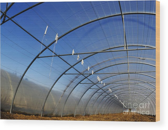 Built Structure Wood Print featuring the photograph Empty Greenhouse In Winter by Sami Sarkis