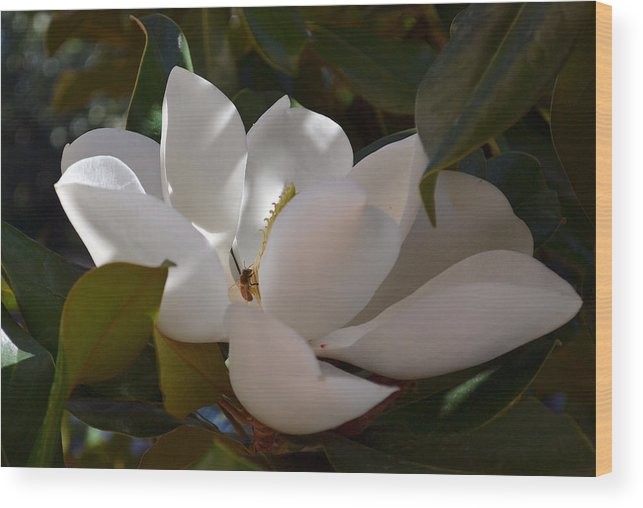 Magnolia Wood Print featuring the photograph Full Bloom by Rima Biswas
