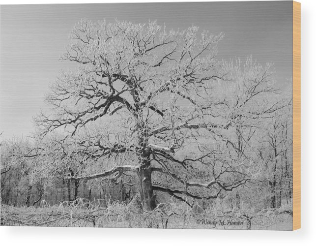 Tree Wood Print featuring the photograph Horizontal Branches Bw by Wendy Hansen-Penman