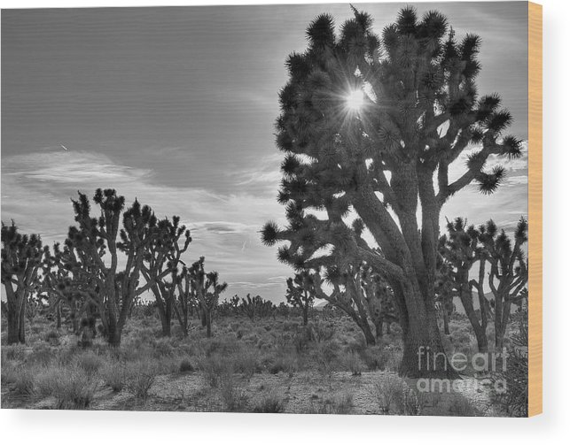 Joshua Tree Wood Print featuring the photograph Joshua Tree National Preserve by Eddie Yerkish