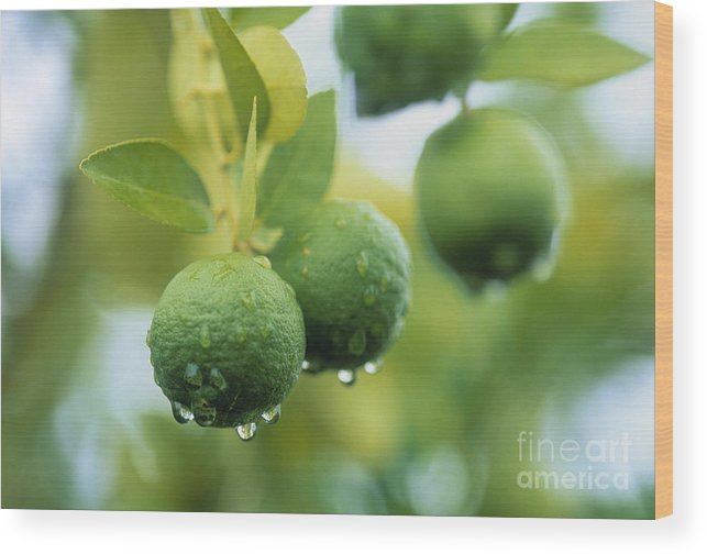 Food And Drink Wood Print featuring the photograph Limes by Juan Silva