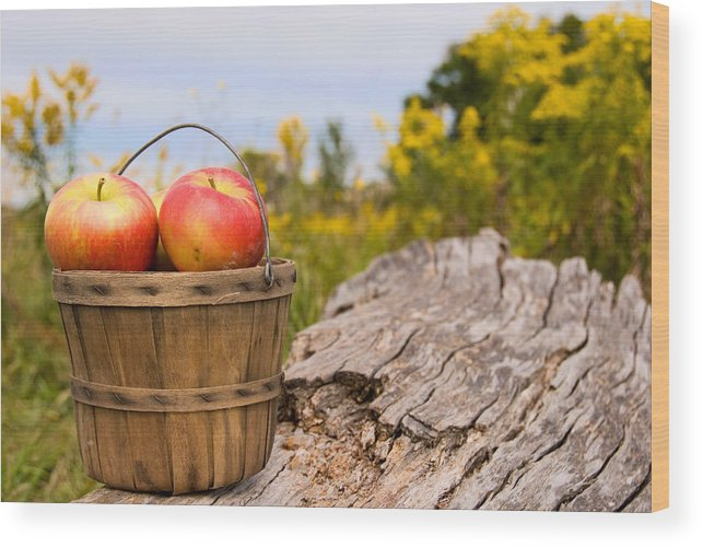 Fruit Wood Print featuring the photograph Michigan Apples by Maria Dryfhout