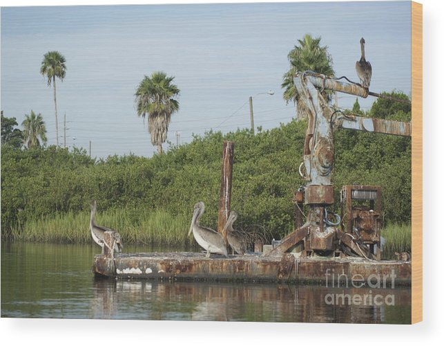Avian.nature Wood Print featuring the photograph Party Barge by Jack Norton