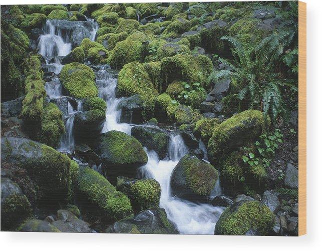 Rainforest Wood Print featuring the photograph Rain Forest Stream by Sandra Bronstein