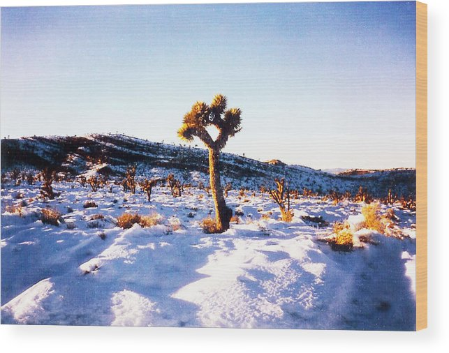 Snow Wood Print featuring the pyrography Snow Cactus by Karen Chappell