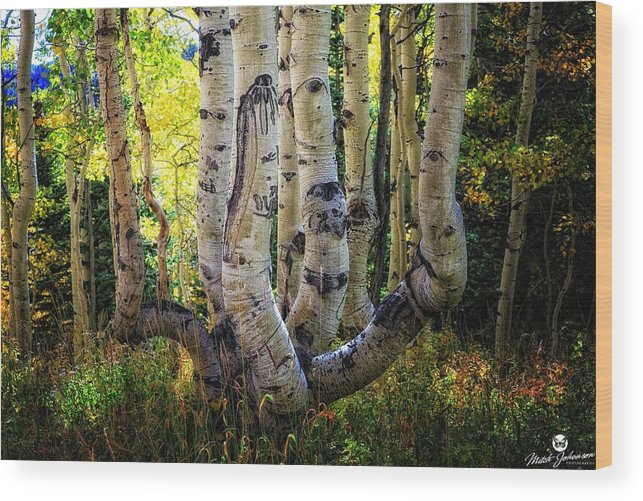 Tree Wood Print featuring the photograph The Multiple Trunk Aspen Tree by Mitch Johanson