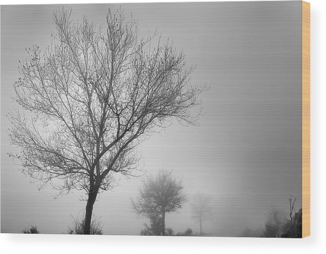 Black And White Wood Print featuring the photograph Three Silhouettes In The Rain by Guido Montanes Castillo