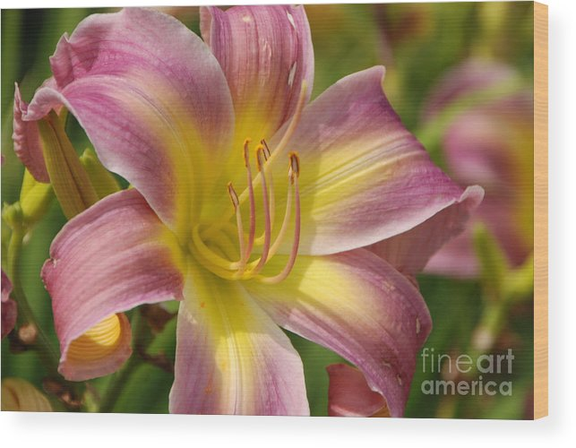 Tiger Lilly Wood Print featuring the photograph Tiger Lilly by Grace Grogan