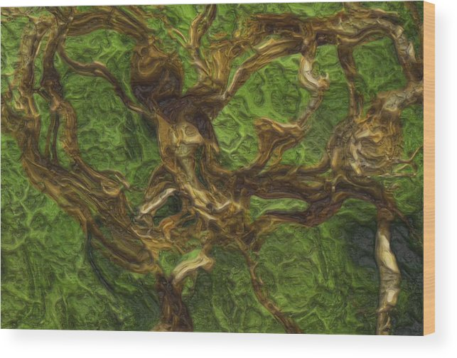 Twist Wood Print featuring the photograph Twisted by Jack Zulli