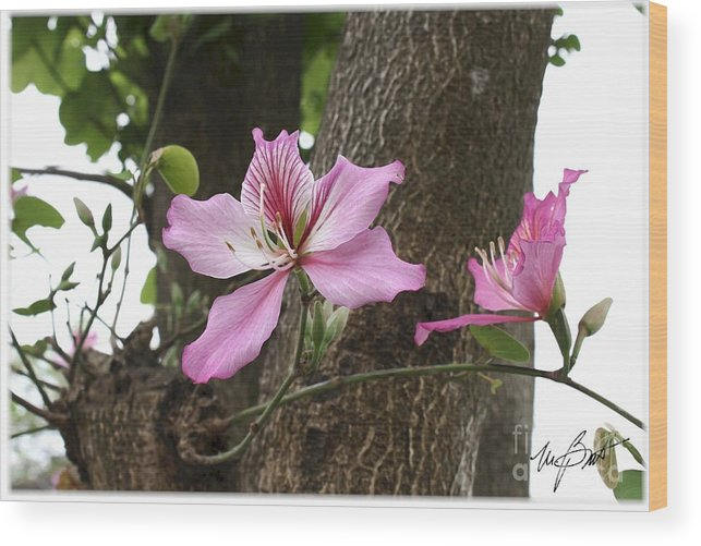Flower Wood Print featuring the digital art Wild Flower by Maxine Bochnia
