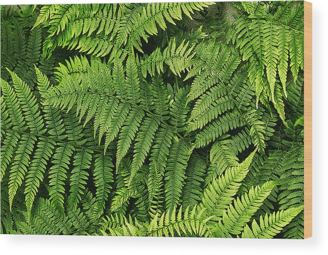 Fern Wood Print featuring the photograph Woodland Fern by Margie Avellino