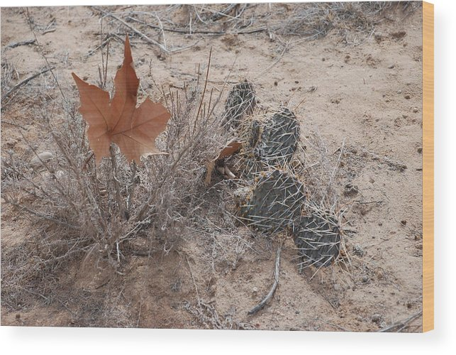 Desert Wood Print featuring the photograph East Meets West by Rob Hans