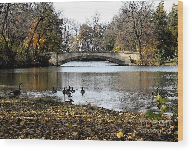 Nature Wood Print featuring the photograph Tenney Park by Gary Everson