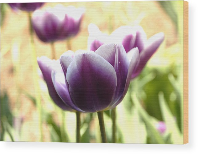 Tulips Wood Print featuring the photograph Tulips by Jessica Wakefield