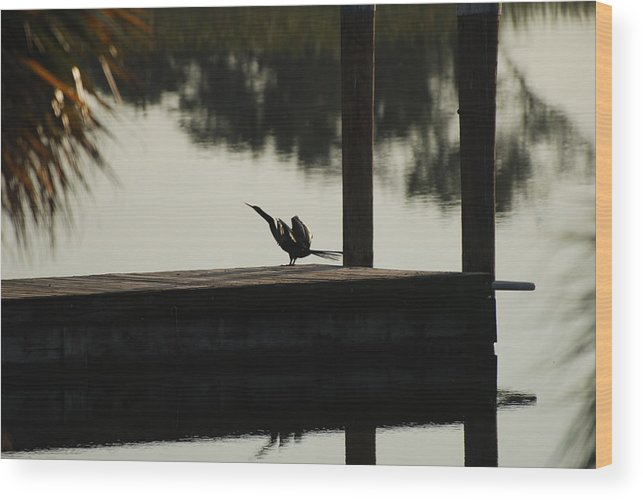 Reflections Wood Print featuring the photograph Dock Bird by Rob Hans
