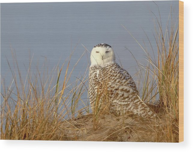 Nature Wood Print featuring the photograph Snowy Owl by Nancy Wilkinson