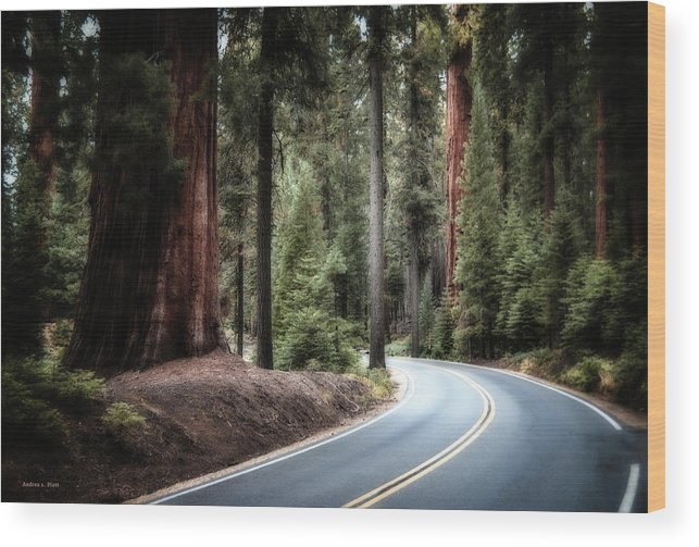 Sequoia Wood Print featuring the photograph A Bright Future Around The Bend by Andrea Platt