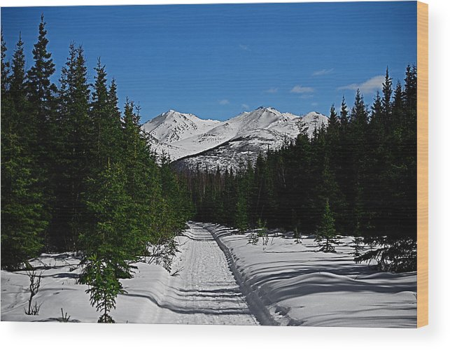 Anchorage Mountains White Trees Wood Print featuring the photograph Anchorage Mountains by Galeria Trompiz