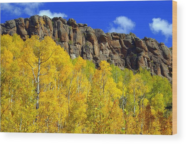 Fall Colors Wood Print featuring the photograph Aspen Glory by Marty Koch