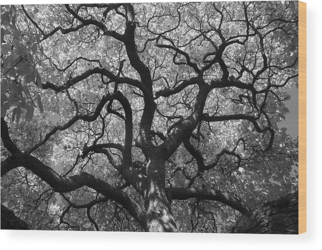 Tree Wood Print featuring the photograph Autumn Bloom by Sonja Anderson