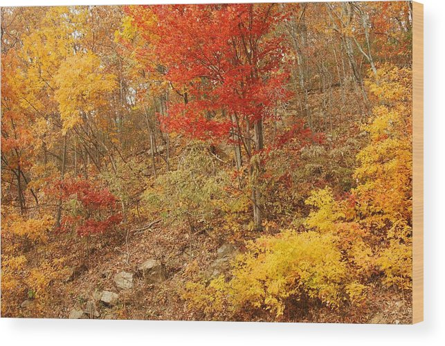 Shenandoah Wood Print featuring the photograph Autumn In Shenandoah by Stephen Vecchiotti