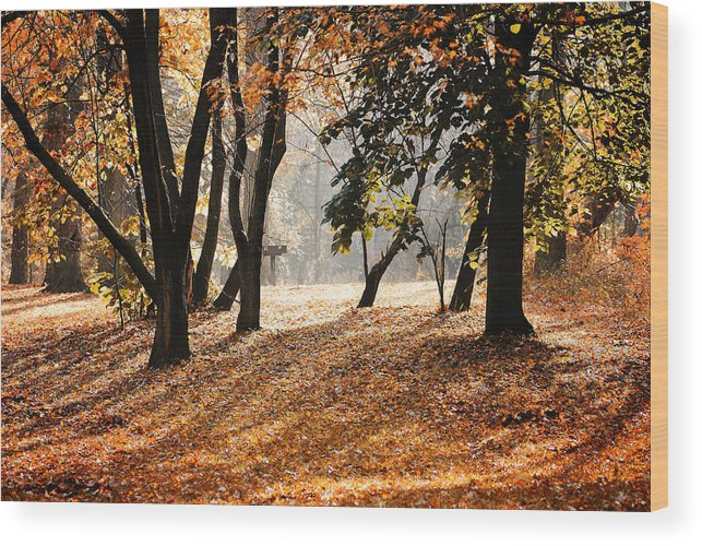 Morning Wood Print featuring the photograph Autumn In The Park by Andriy Zolotoiy
