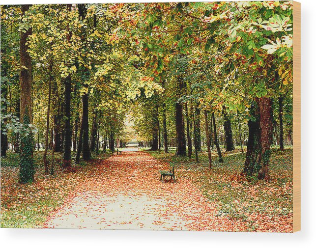 Autumn Wood Print featuring the photograph Autumn In The Park by Nancy Mueller
