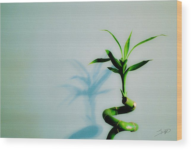 Bamboo Wood Print featuring the photograph Bamboo by Spadafora Photography