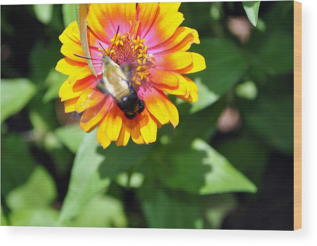 Nature Photography Wood Print featuring the photograph Bee Easy by Dion Baker