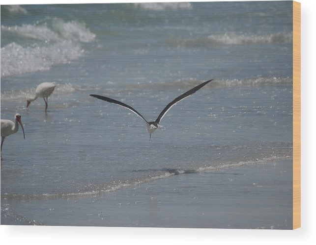 Bird Wood Print featuring the photograph Bird Flying In The Surf 2 by Lisa Gabrius