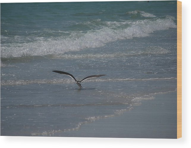 Birds Wood Print featuring the photograph Bird Flying In The Surf by Lisa Gabrius