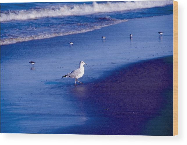 Ocean Wood Print featuring the photograph Birds On Beach by George Ferrell