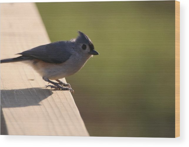 Bird Wood Print featuring the photograph Blue Bird by Lisa Johnston