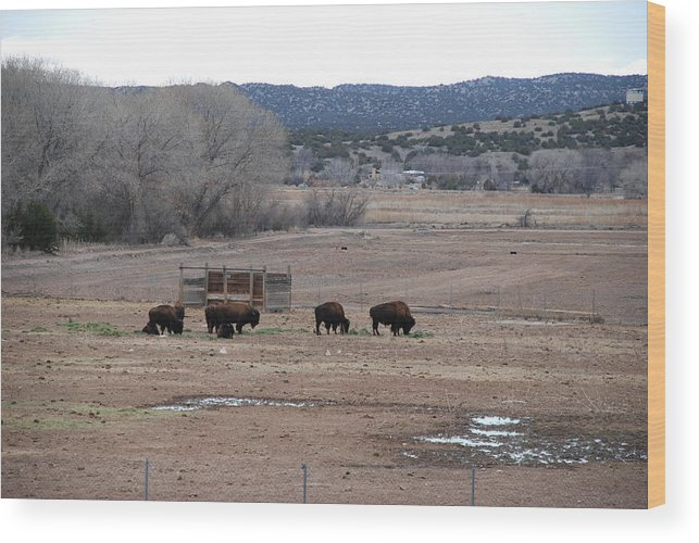 Buffalo Wood Print featuring the photograph Buffalo New Mexico by Rob Hans