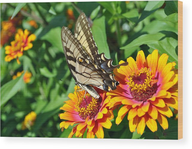 Nature Photography Wood Print featuring the photograph Butterfly Beauty by Dion Baker