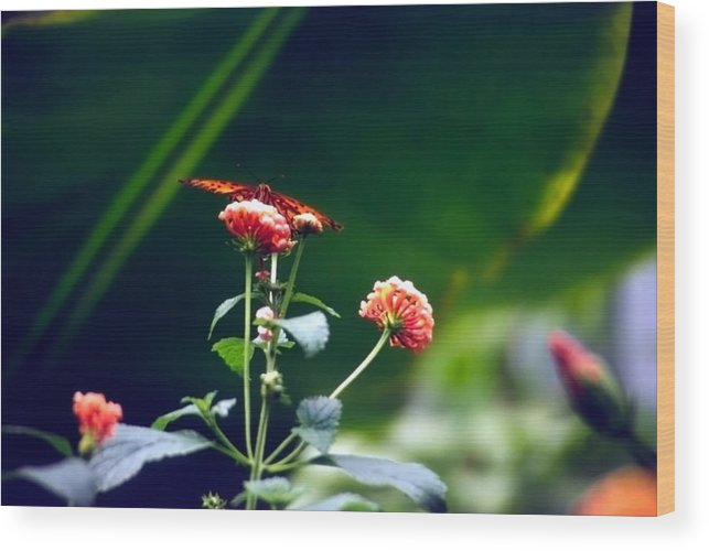 Butterfly; Insect; Flowers; Orange Wood Print featuring the photograph Butterfly On Flower by Steve Ohlsen