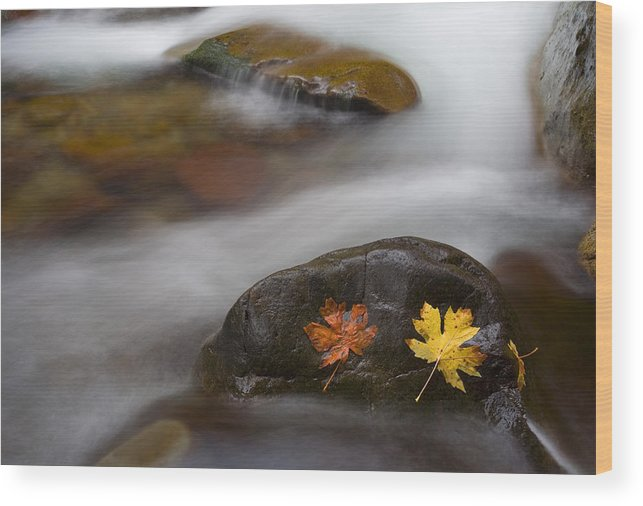Leaves Wood Print featuring the photograph Castaways by Mike Dawson