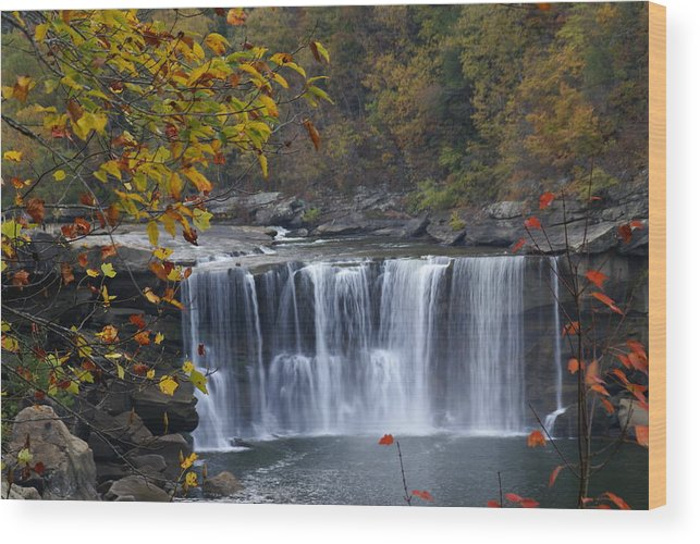 Landscape Wood Print featuring the photograph Cumberland Falls In Gold by Bj Hodges