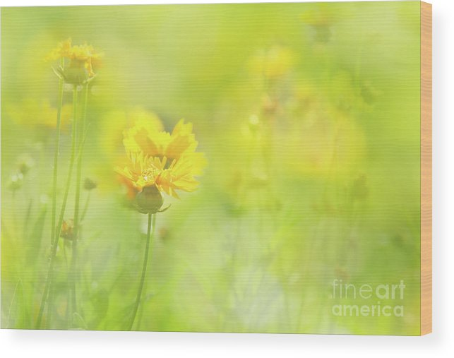 Flowers Wood Print featuring the photograph Day Glow by Marilyn Cornwell