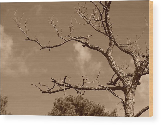 Sepia Wood Print featuring the photograph Dead Wood by Rob Hans