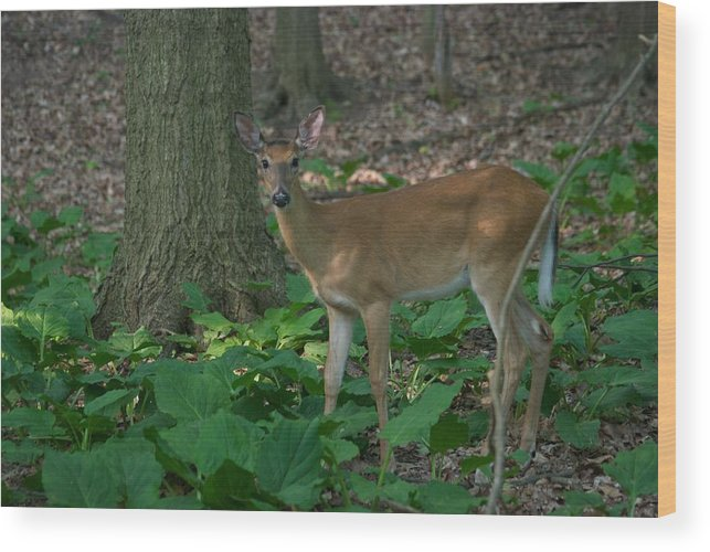 Animal Wood Print featuring the photograph Deer 7414 by Michael Peychich