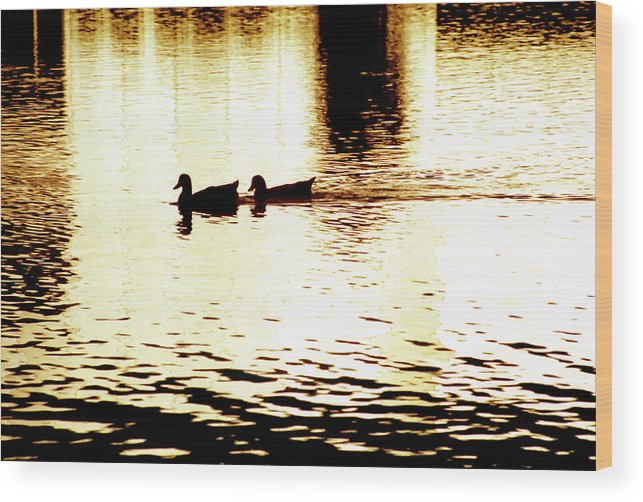 Silhouettes Wood Print featuring the photograph Ducks On Pond 1 by Steve Ohlsen