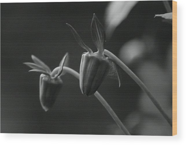 Flower Wood Print featuring the photograph Fa-14 by Suraj Sharma